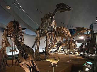 日本最大級の「福井県立恐竜博物館」も大人気! 知られざる恐竜の世界へGO!