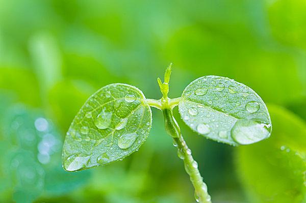 二十四節気「穀雨(こくう)」。百穀を潤す春の雨が、けむるように降るころ