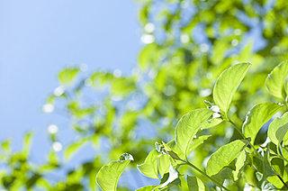 二十四節気「立夏(りっか)」。青空と薫風に初夏の到来を感じるころ