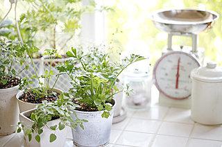 育てる楽しみ、食べるうれしさ! 5月はプランター菜園作りのベストタイミング!