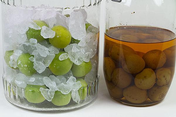 梅酒作りの季節到来! 「世界を旅した梅」のお話も