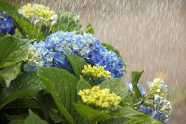 この時期に気をつけたい、梅雨の...