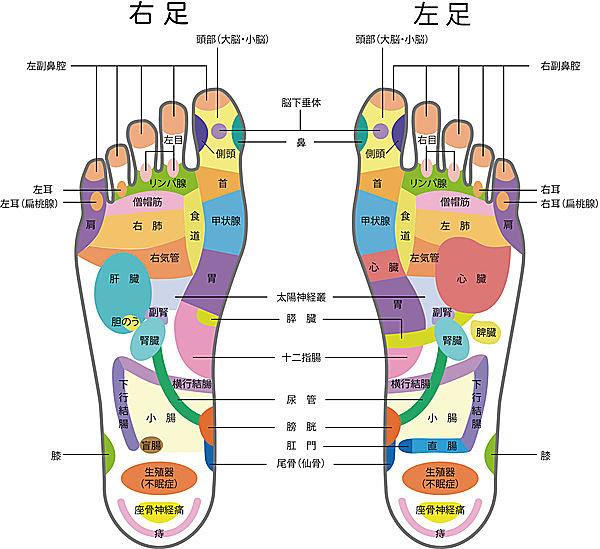 足裏には全身の反射区が集まっていて、60~70