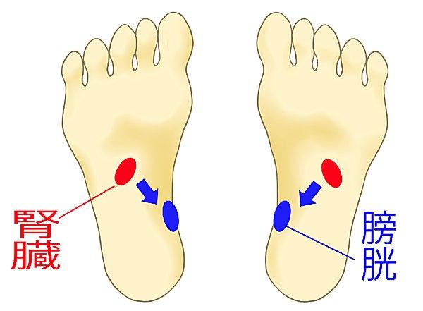 腎臓の反射区から膀胱の反射区へ刺激を与えましょう!