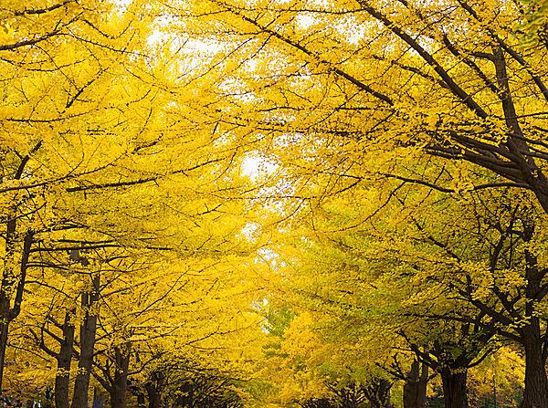 太陽を遮るほどの黄色のトンネル!!