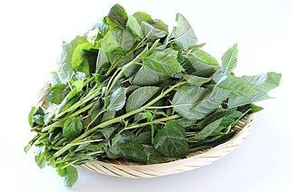 王様の野菜「モロヘイヤ」。栄養満点、旬の野菜で夏バテを吹き飛ばそう