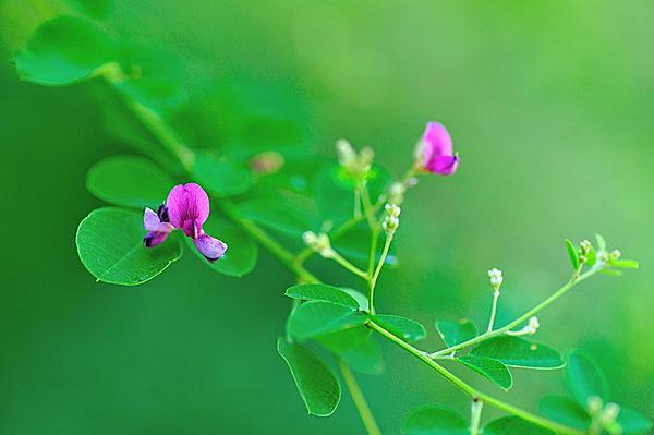 薄(すすき)をはじめ萩、撫子など秋の草花も咲き始めて