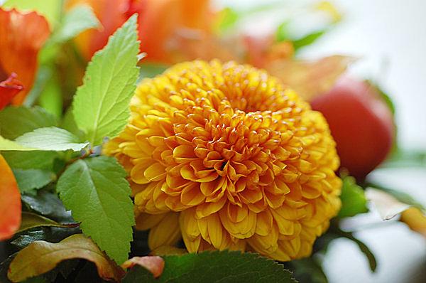 秋色の菊のアレンジメント
