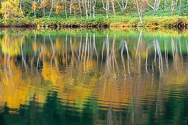 秋の澄んだ水辺