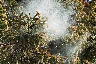 クスリを飲む前に、やっておきたい花粉症予防対策