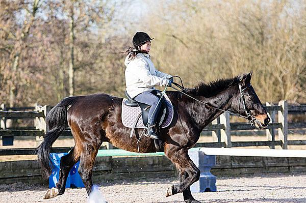 ちょっとリッチな乗馬体験を!(画像はイメージ)