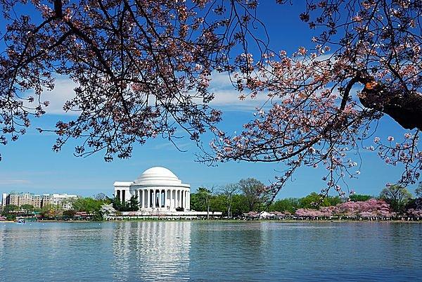 桜が満開のジェファーソン記念堂。桜が水面に映える。