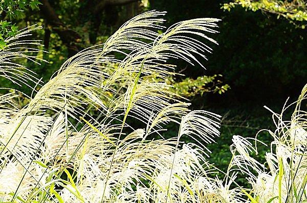 日 こそ の 枕草子 野 の また 分 枕草子『野分のまたの日こそ』解説・品詞分解