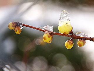 歳時記「冬土用」~冬から春への移り変わる季節