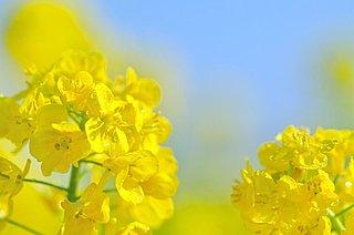 花で季節を感じる~定番の春の花を取り入れて丁寧な暮らし