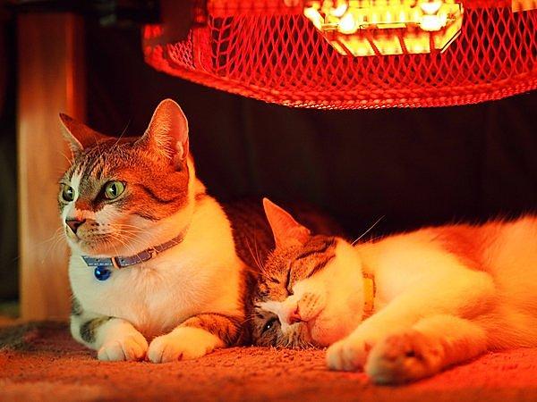 ネコなどのペットの低温やけどや、こたつ内の酸欠にも気をつけて