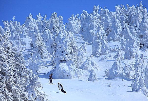 樹氷の間を滑るなんて最高!