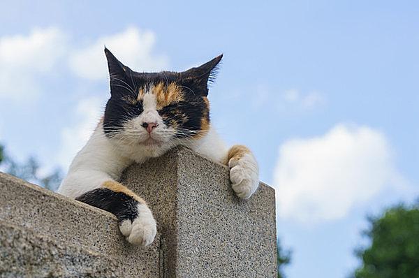 「猫の日」! 日本列島全体が当たり前に「猫の島」であるために