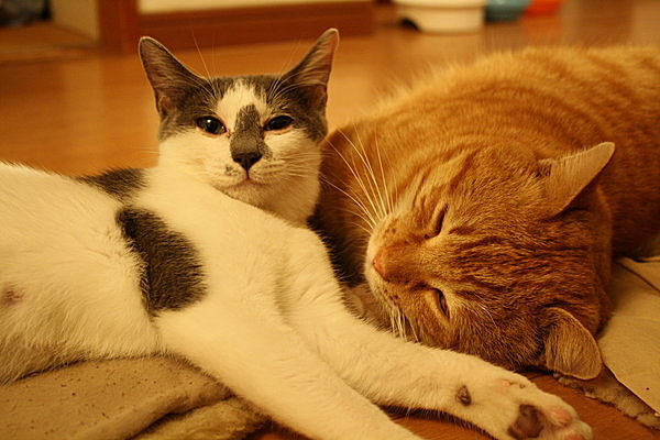 【猫の日宣言】変わらぬ偏見が反映する猫成語を改め、ネコに猫権を!