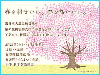 一枚の桜が世代を超えて語り継がれる