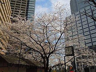 東京は今年初めて20℃を超え