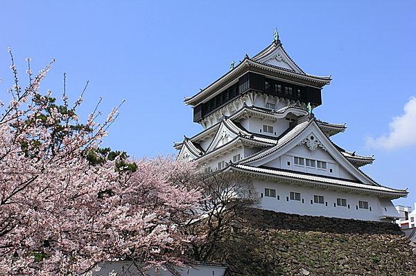 桜に彩られる小倉城。夜桜も素敵!