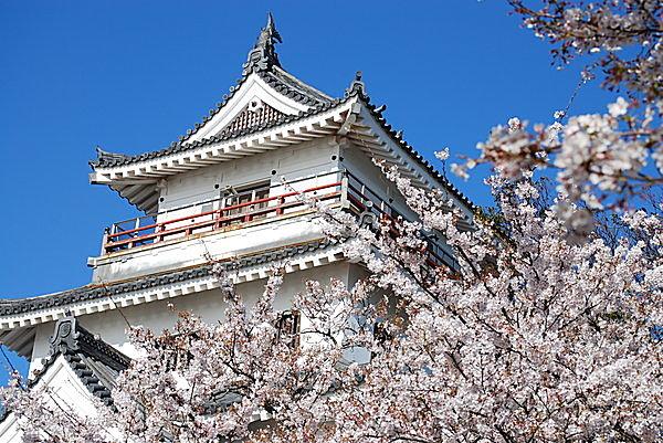 桜に彩られる唐津城(舞鶴公園)