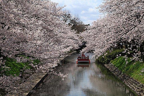 特集|【北陸の桜の名所】遊覧船・古墳・桜並木!北陸ロマンあふれるお花見はいかが?