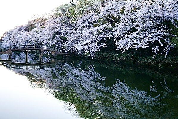 高岡古城公園のお濠