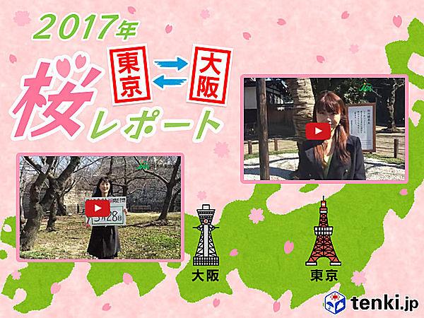 第1回 東京・大阪桜レポート2017
