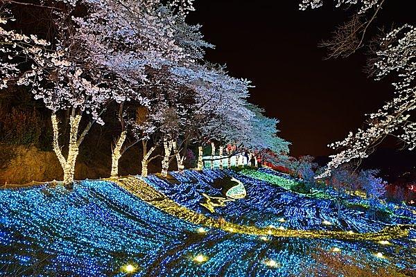 さがみ湖リゾートプレジャーフォレストの夜桜並木