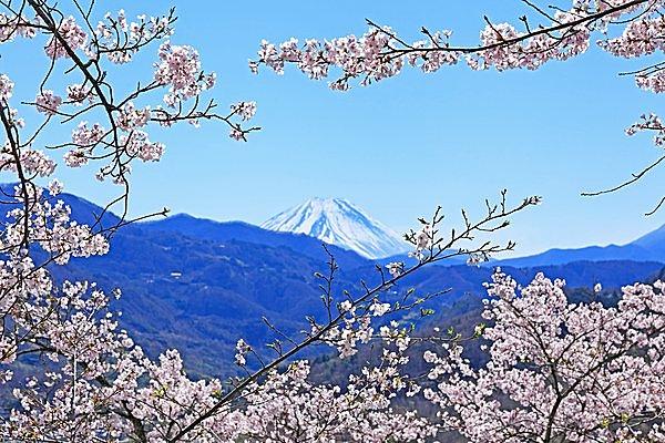 富士山とのコラボも楽しめますよ