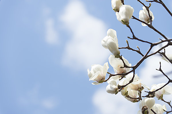 二十四節気「春分」は、自然をたたえ生物をいつくしむ祝日「春分の日」