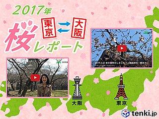 第3回 東京・大阪桜レポート2017