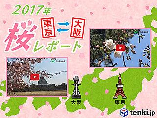 第4回 東京・大阪桜レポート2017~東京は桜満開までカウントダウンスタート~