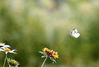 『春にして君を離れ』とシェイクスピアのソネットで春を惜しむ