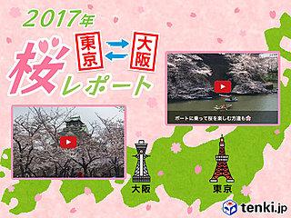 第5回 東京・大阪桜レポート2017~東京は桜満開、大阪はあと少し!~
