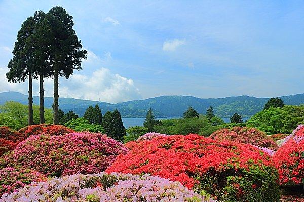 ツツジの庭園から芦ノ湖を望む