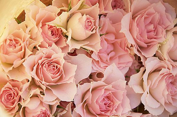 行楽シーズン到来! バラを観に行こう!【2017.5】