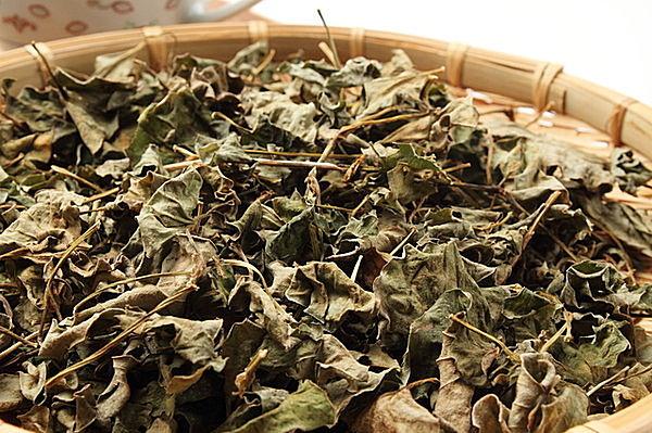 次は、ドクダミの葉を乾燥させて「十薬(じゅうやく」作りに挑戦!