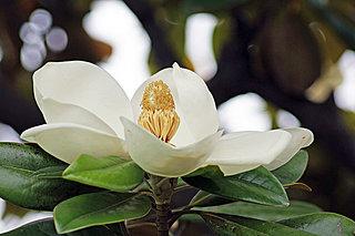 琳派から現代まで…時代を超えて描かれ続けた「花」の魅力