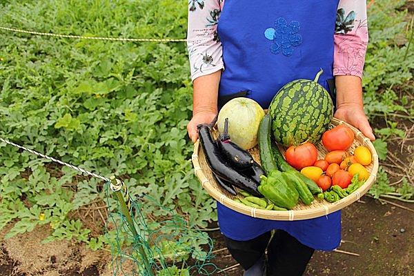 夏休みにおすすめ!収穫体験もできるおすすめスポット【特集|関西2017】