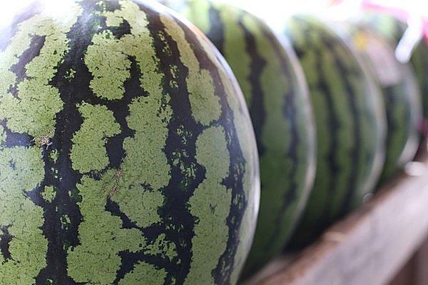 果実的野菜のスイカ基礎知識
