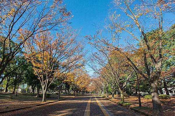 秋の駒沢オリンピック公園も素敵ですね