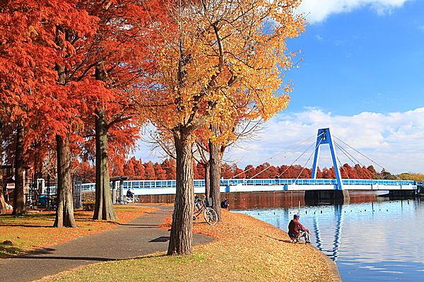 オレンジ色に染まる水元公園