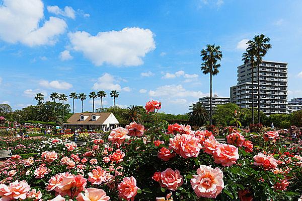 見渡す限りのバラの花園