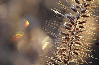 二十四節気「霜降」。露から霜に。季節は駆け足で晩秋から初冬へ