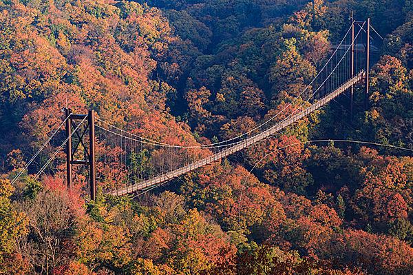 森の中の吊り橋「星のブランコ」