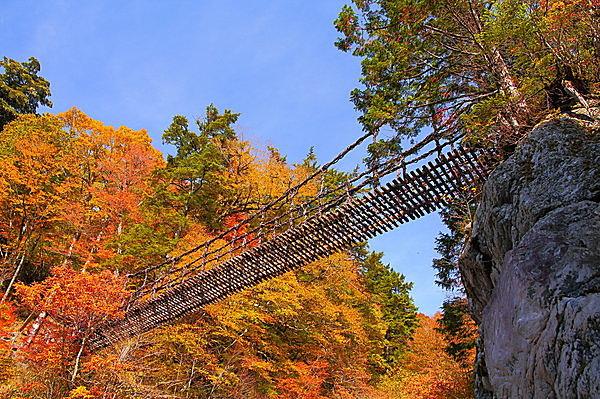 3年毎に架け替えが行われる「祖谷のかずら橋」