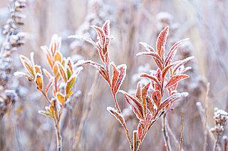今日から霜月、寒さはやって来ますが思いきって「風雅」に過ごしてみませんか?